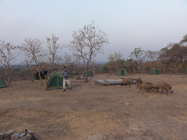 My tent next to a warthog residence (under platform)